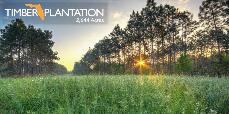 2,644 Florida Timber Plantation For Sale