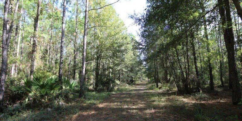 Plantação de Pinheiros à Venda na Florida
