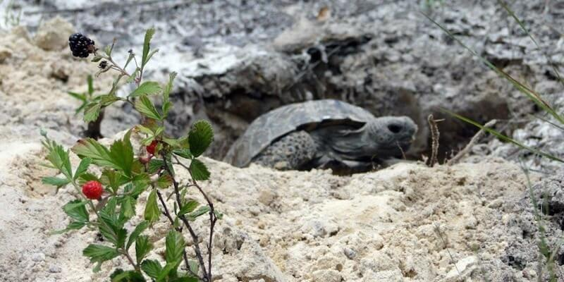Florida Gopher Tortoise Property For Sale
