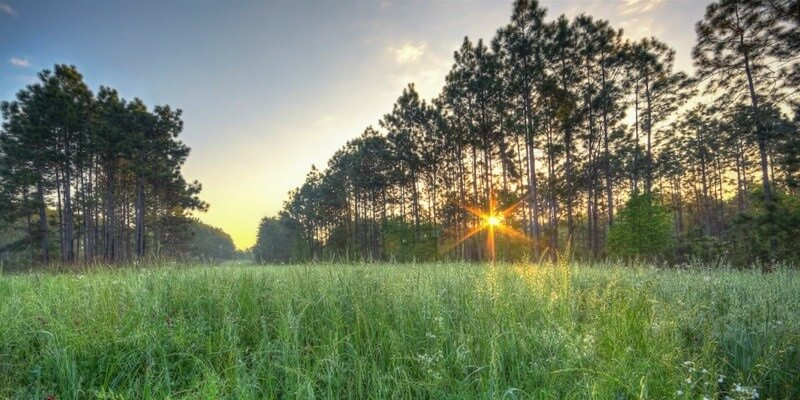 2,644 Acre Florida Timber Plantation Prodamo