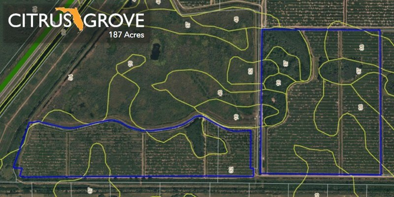187 Acre Florida Citrus Grove For Sale