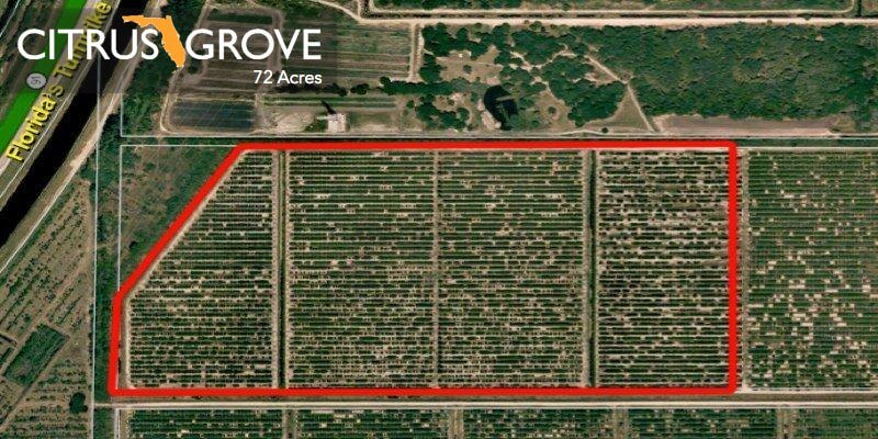 72 Acre Florida Citrus Grove For Sale