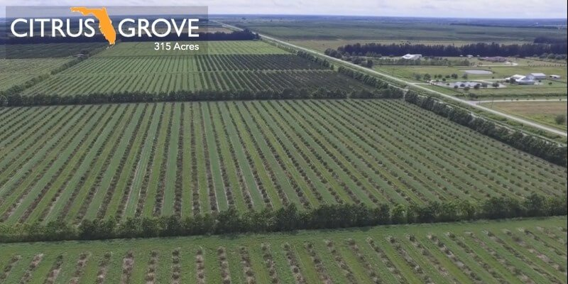 315 Acre Florida Citrus Grove Till salu