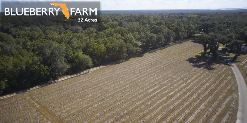 32 Acre Florida Blueberry Farm For Sale