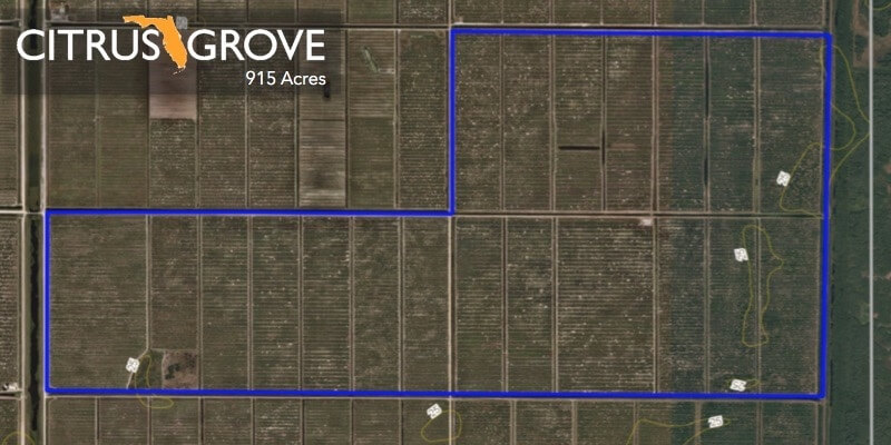 915 Acre Florida Orange Citrus Grove For Sale