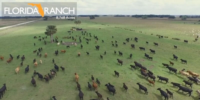 8768 Acre Florida Cattle Ranch