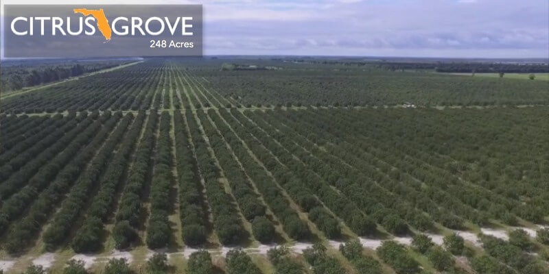 248 Acre Florida Citrus Grove For Sale