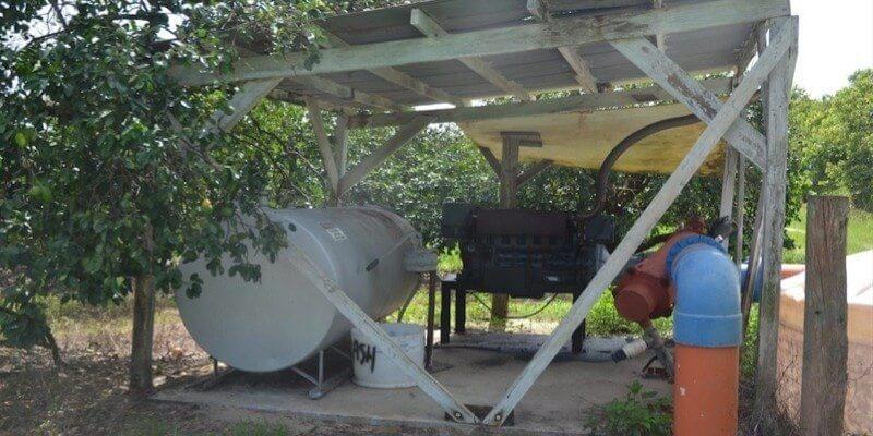 Plantação de Toranjas à Venda na Florida EUA