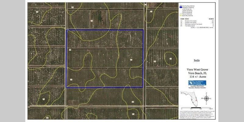 Plantación de Pomelos en Venta en Florida EEUU
