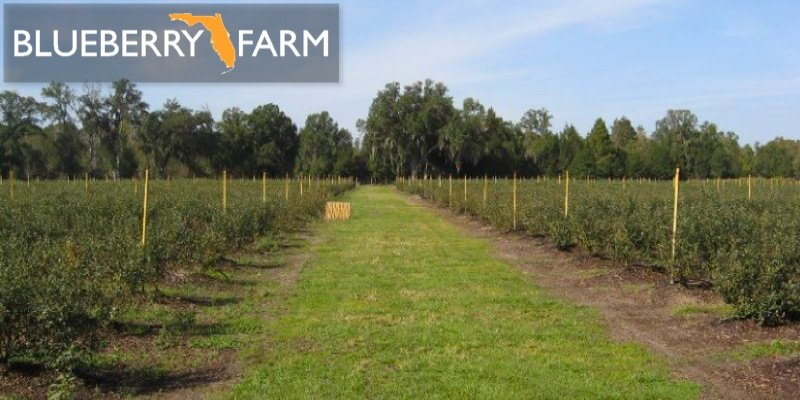 blueberry farm for sale florida