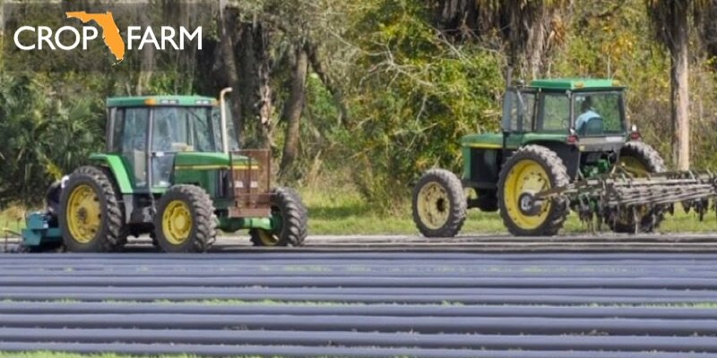 florida strawberry farm for sale