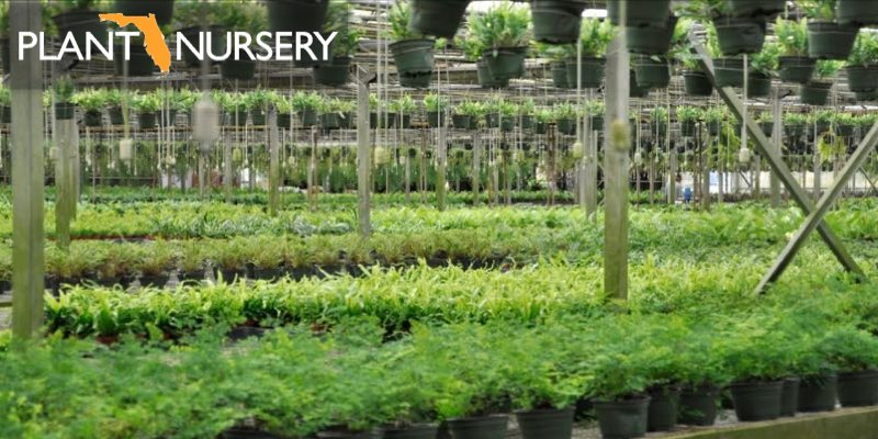 plant nursery for sale florida