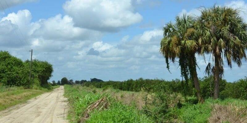 Fazenda de Laranja a Venda na Florida EUA