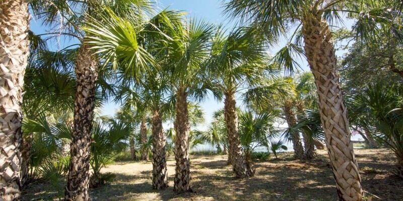 Isla Privada en venta en Florida EEUU