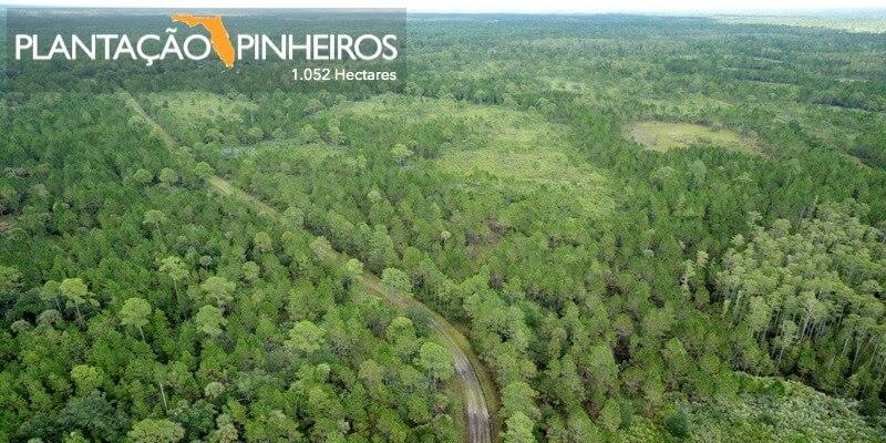 Plantação Pinheiros a Venda Florida EUA