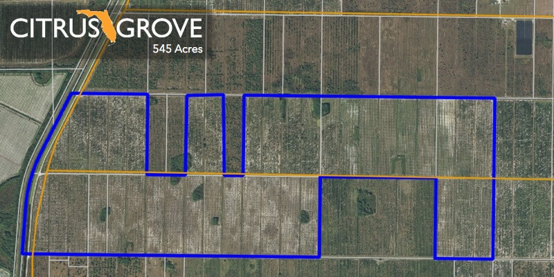 545 Acre Florida Citrus Grove Till salu