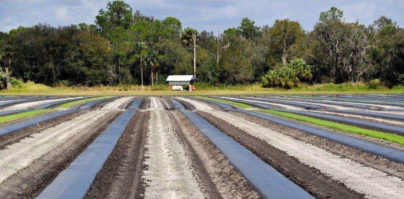 289 Acre Florida Fruit ferme à vendre