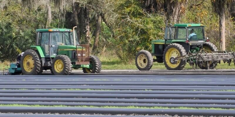 水果农场在美国销售