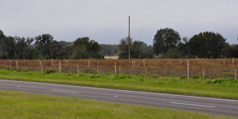 Granja de Frutas en Venta en Florida EEUU