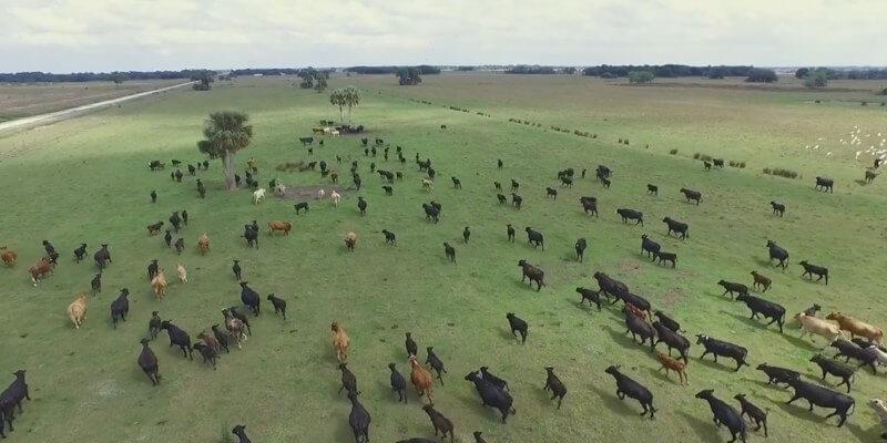 养牛场在美国销售