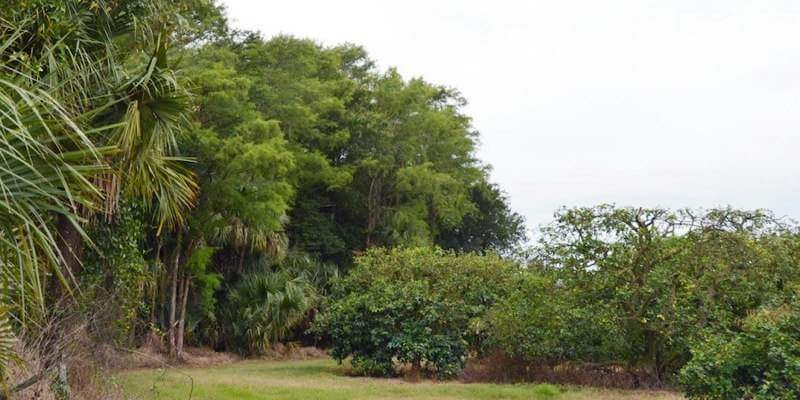 187 Acre Florida Orange Grove For Sale