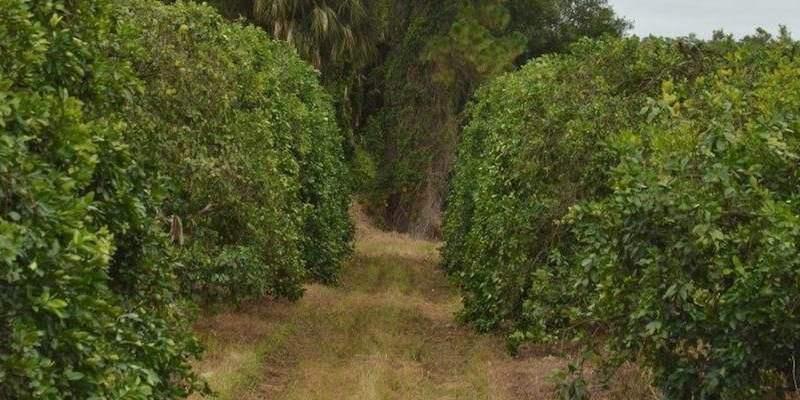 Campo Cítrico Venta Florida EEUU
