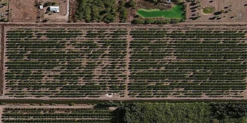 campo naranjas venta florida eeuu