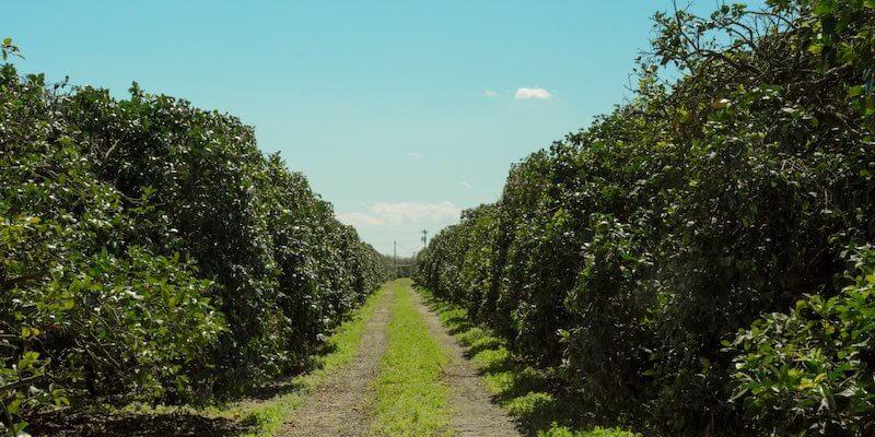 Fazenda Laranja a Venda Florida EUA