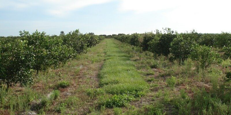2254 Acre Florida Crop Farm For Sale