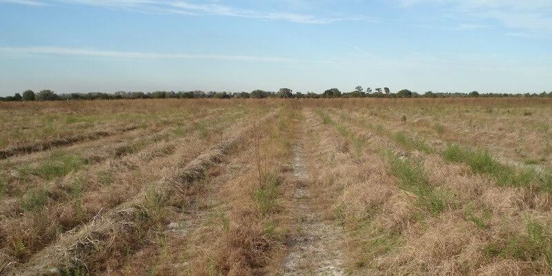 Ferme Agricole a Vendre en Floride