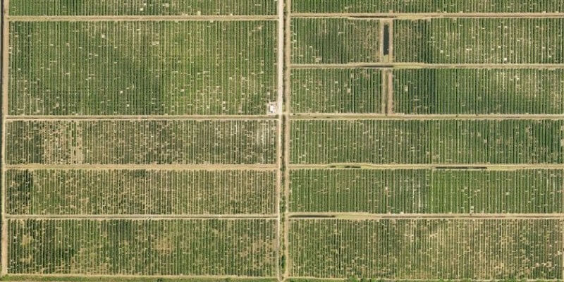 915 Acre Florida Citrus Grove À Vendre