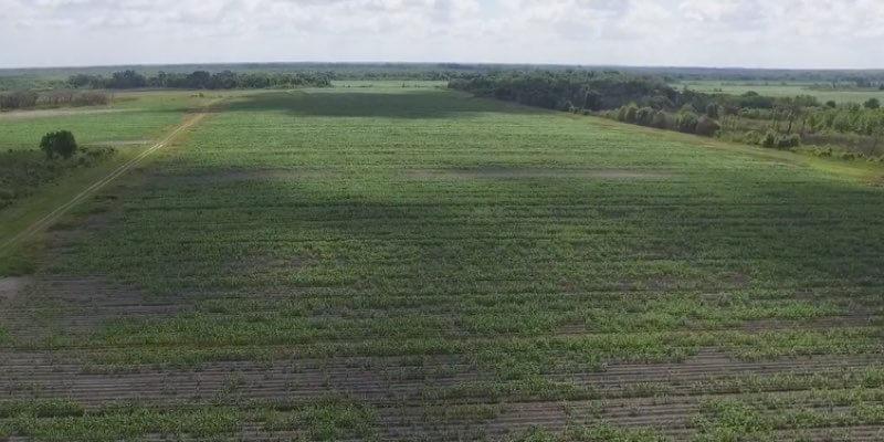 landwirtschaftliche Grundstücke zum Verkauf in Florida