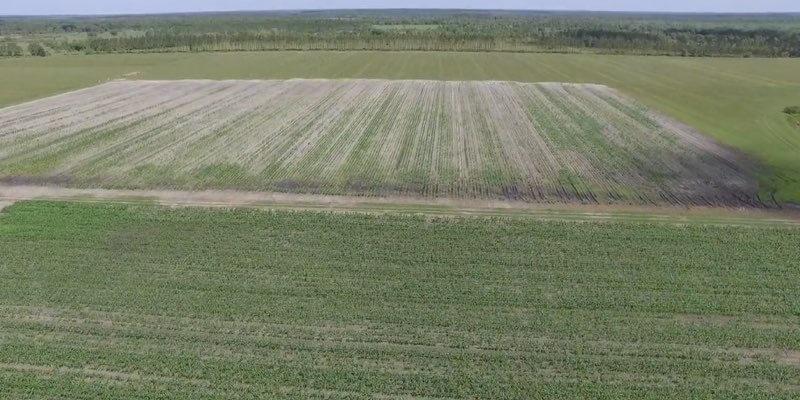 קרקע חקלאית למכירה בפלורידה