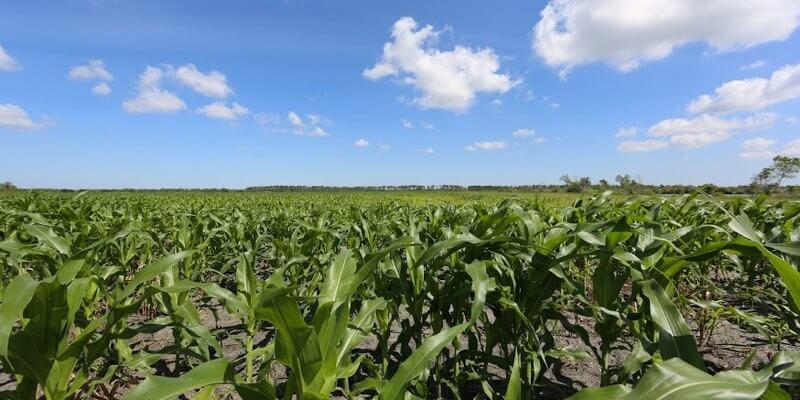 Продажа сельскохозяйственной земли во Флориде
