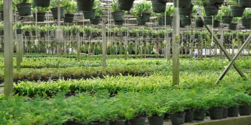 invernadero comercial en venta florida eeuu