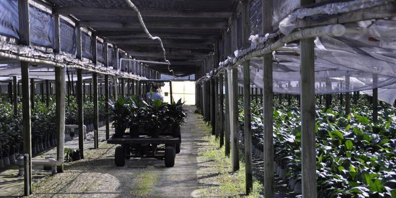 植物苗圃出售美国