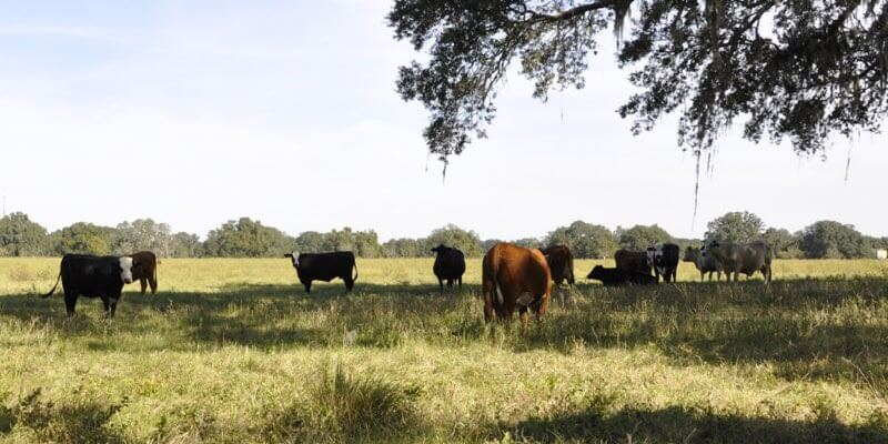 Farm For Sale in Ocala