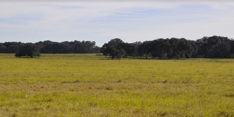 boerderij te koop Ocala