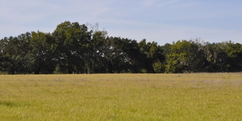 Ocala החווה למכירה
