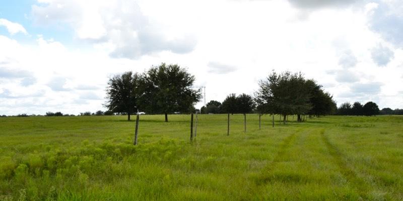 フロリダ 牧場