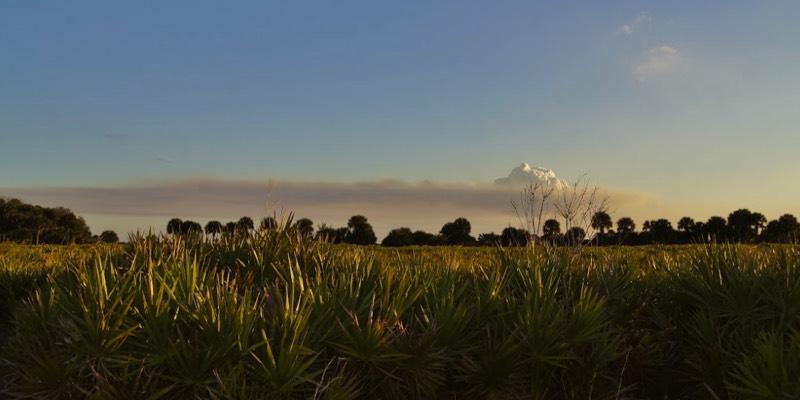 مزارع للبيع في فلوريدا