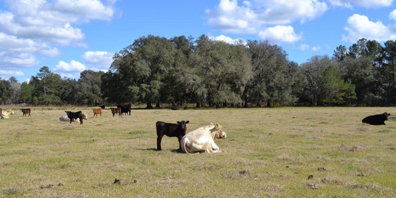 牛场出售美国