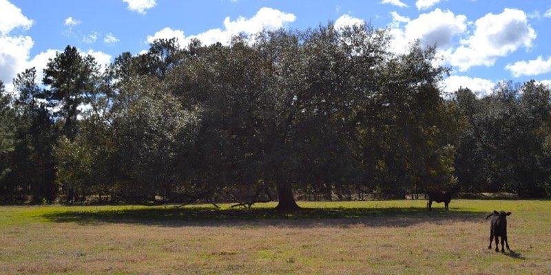 Campo ganadero en venta cerca de Tampa