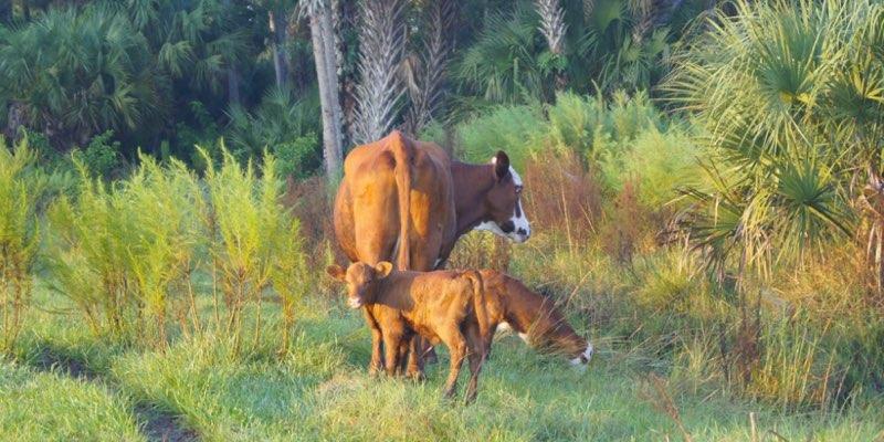 Große ranch zum verkauf usa