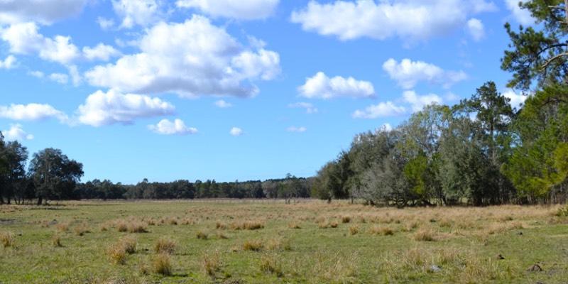 ранчо крупного рогатого скота для продажи в Соединенных Штатах