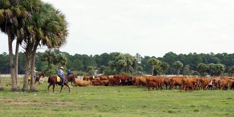 большая ферма для продажи США
