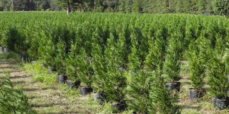 Tree Farm For Sale Florida