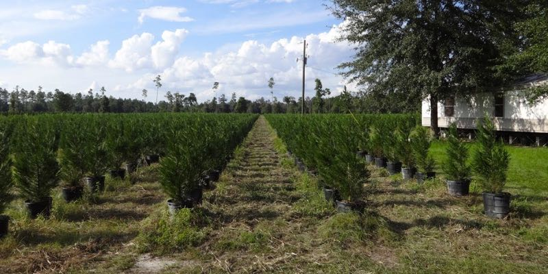 Vivero de Plantas en Venta en Florida