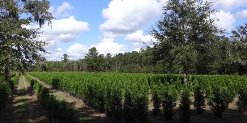 Vivero de Plantas en Venta en EEUU