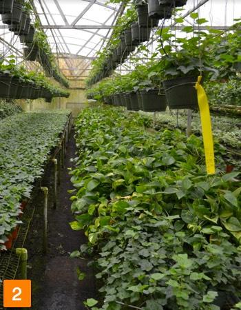Foliage Nursery For Sale in Apopka